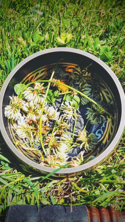 A Bowl of Dandelions